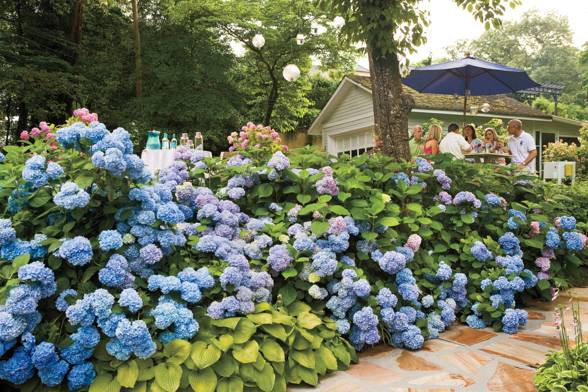 Secrets to the longest lasting hydrangeas southern living for Garden designs with hydrangeas