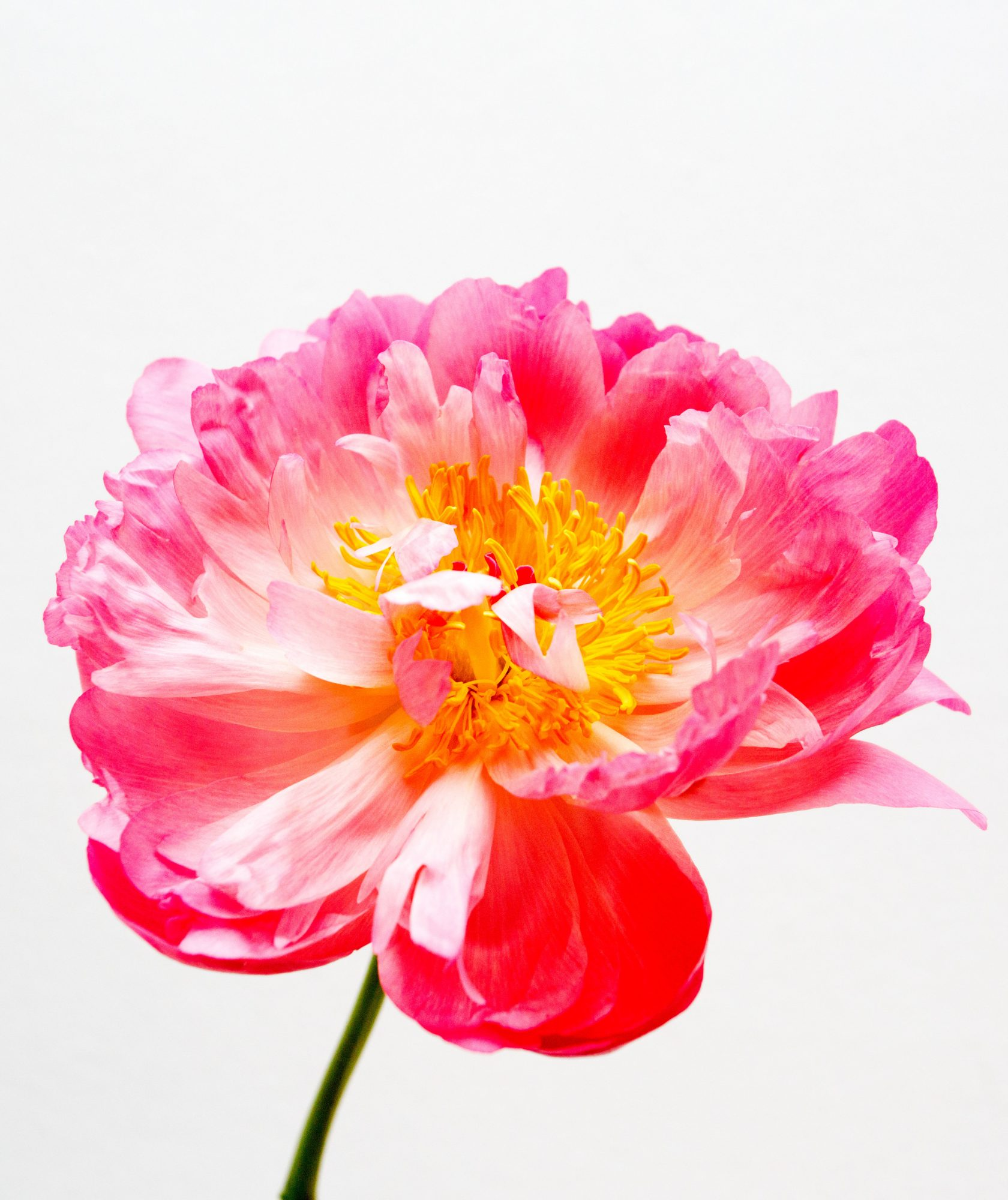 For the Person With Dramatic Flair: Peonies