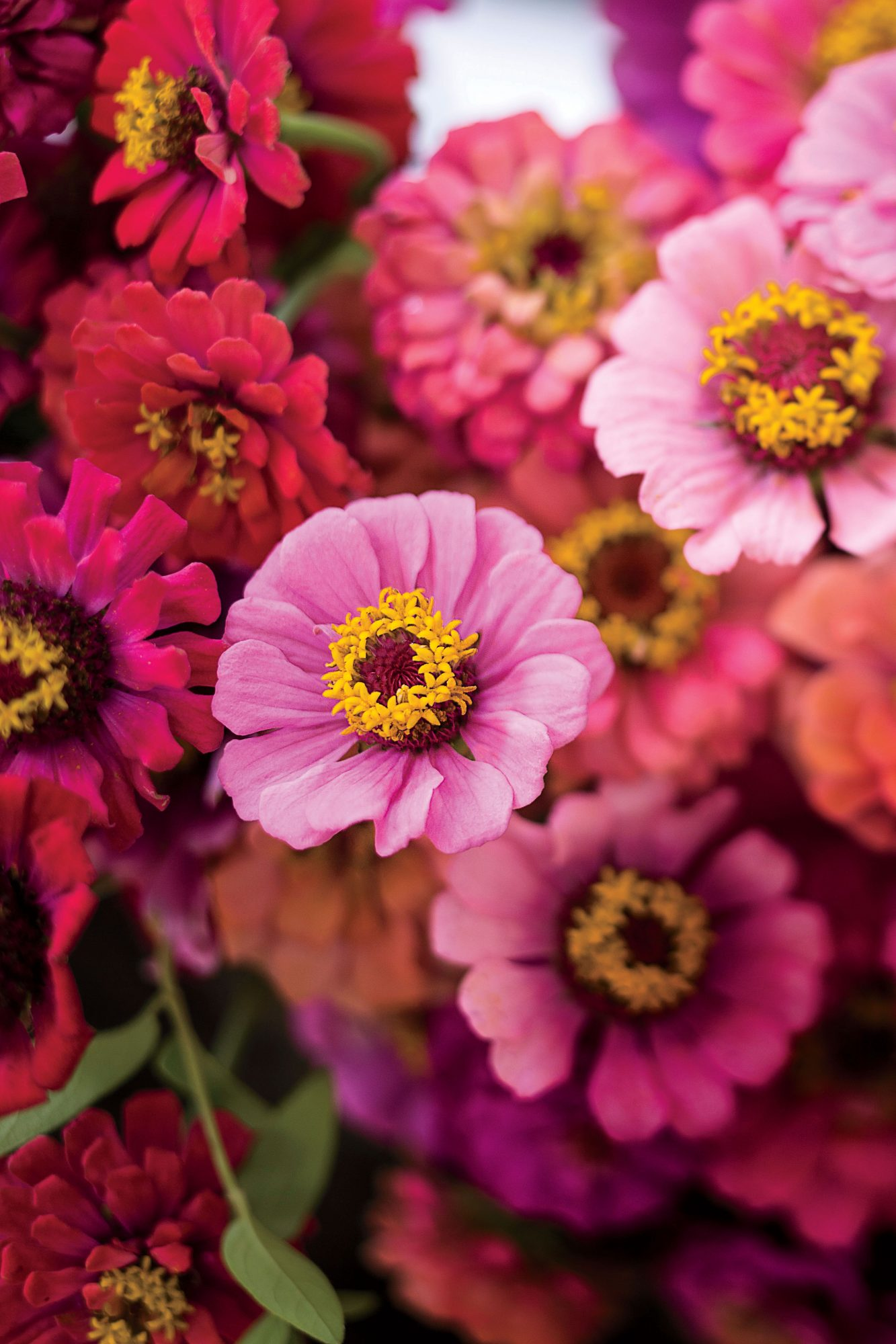 This is How Southern Gardeners Enjoy Color All Year Long - Southern ...