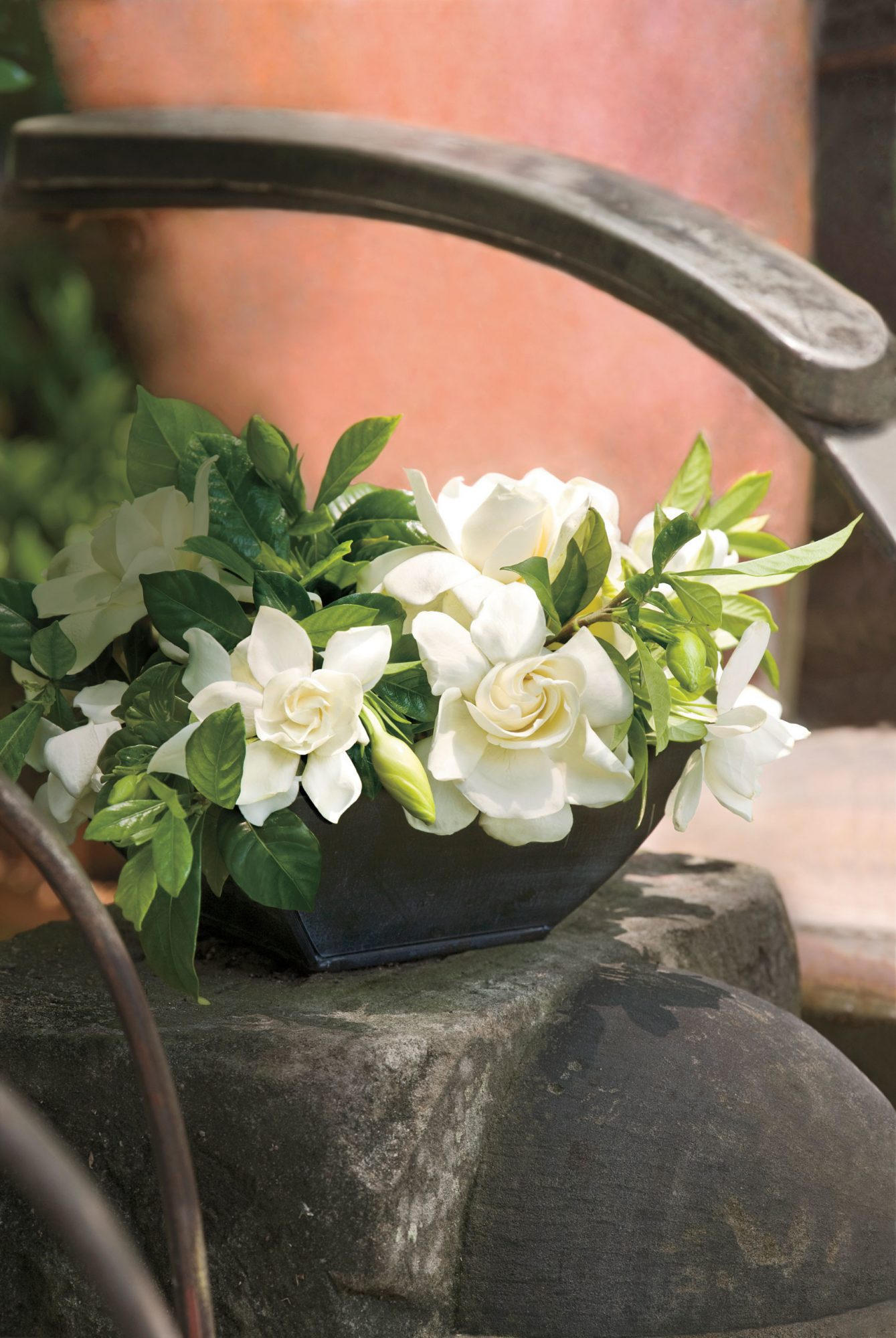 Go Ahead, Plant Those Gardenias - Southern Living