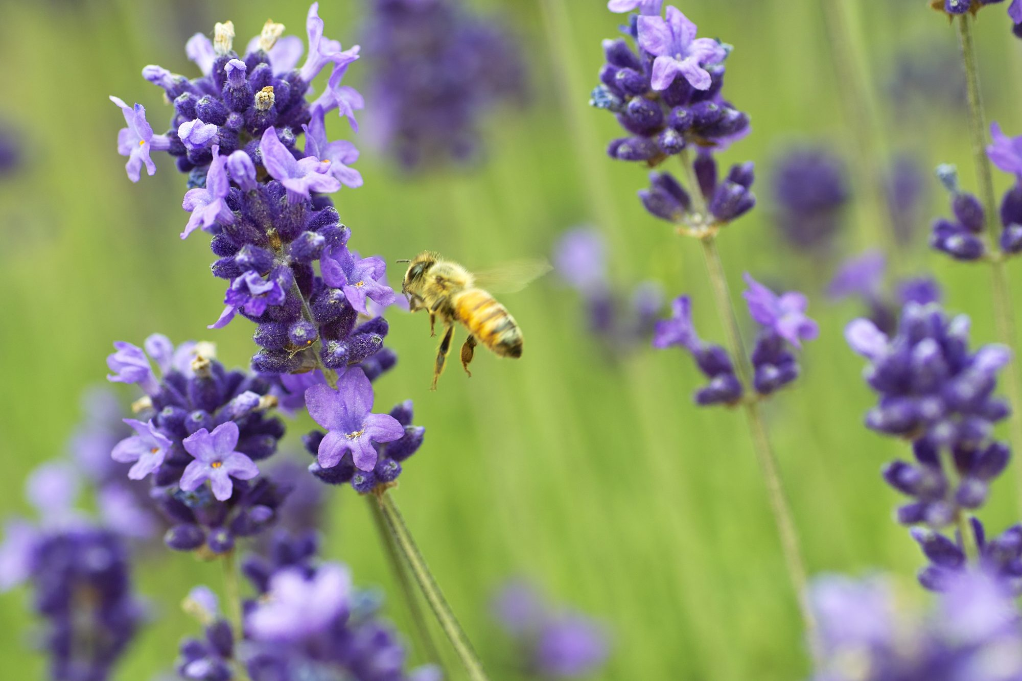 Here's How You Can Help Save The Bees