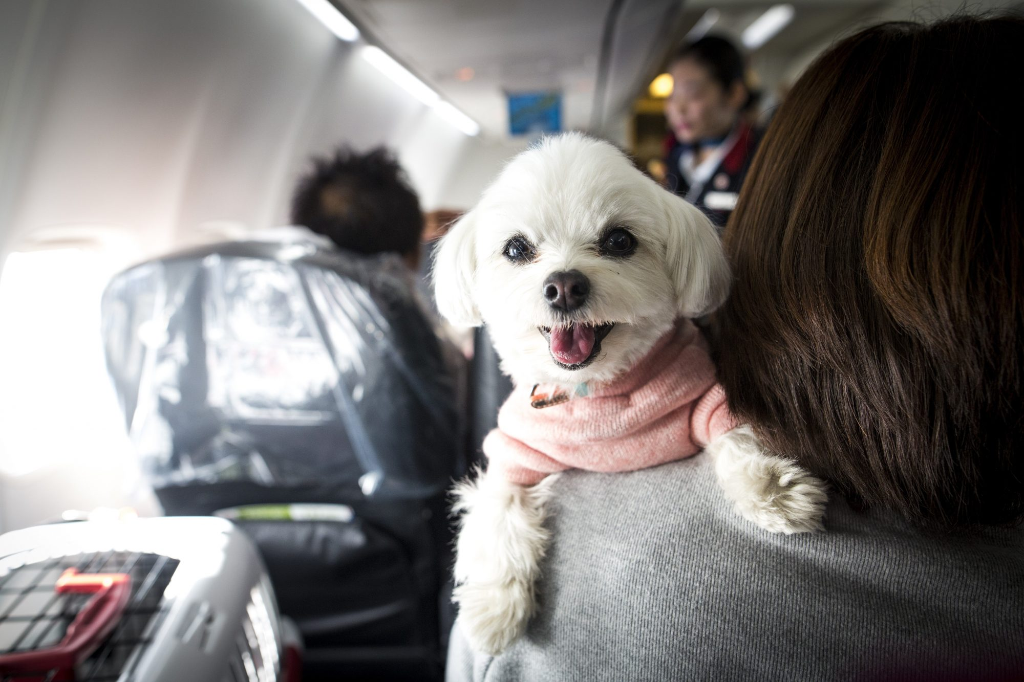 Dogs and their owners allowed to sit together on flight