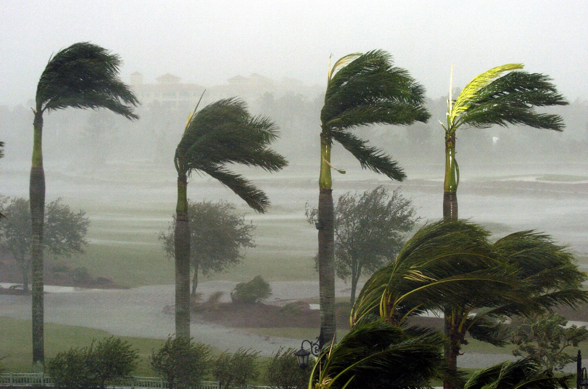 Florida Palms in Storm
