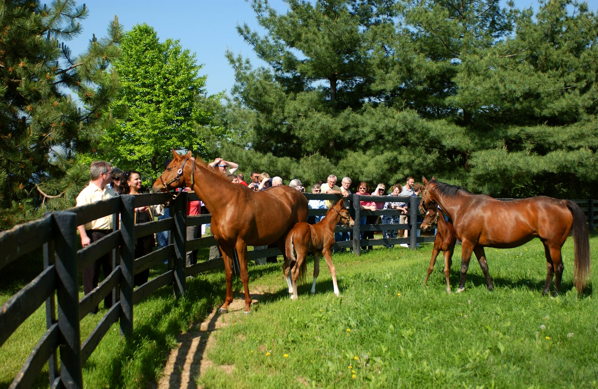 Lexington Kentucky Horse Farm Tour
