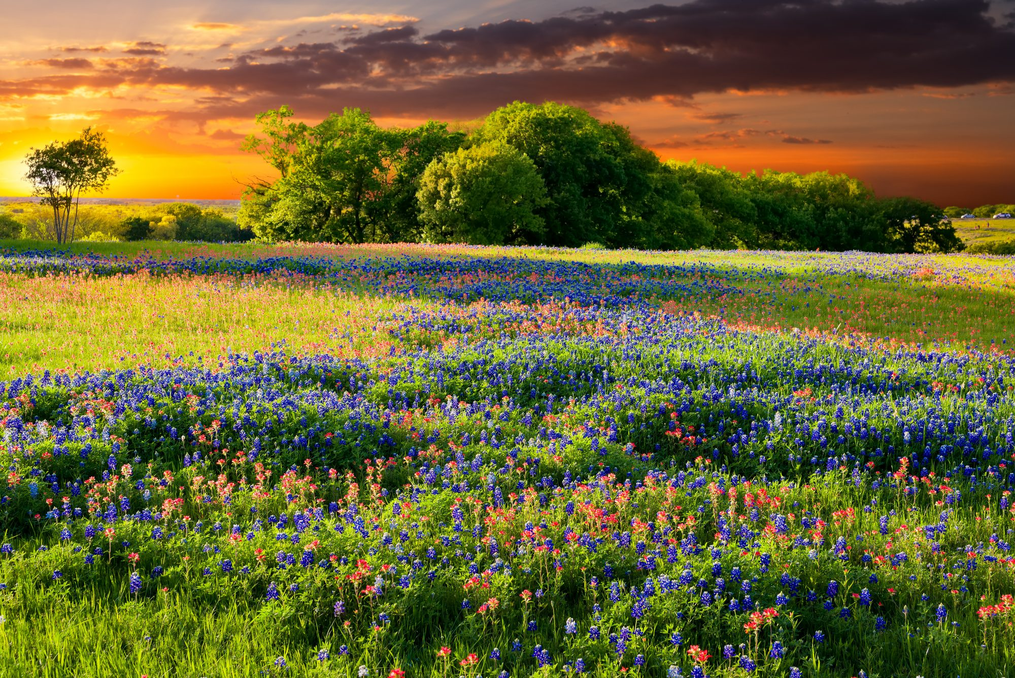 We Love How Wildflowers Paint The Texas Landscape