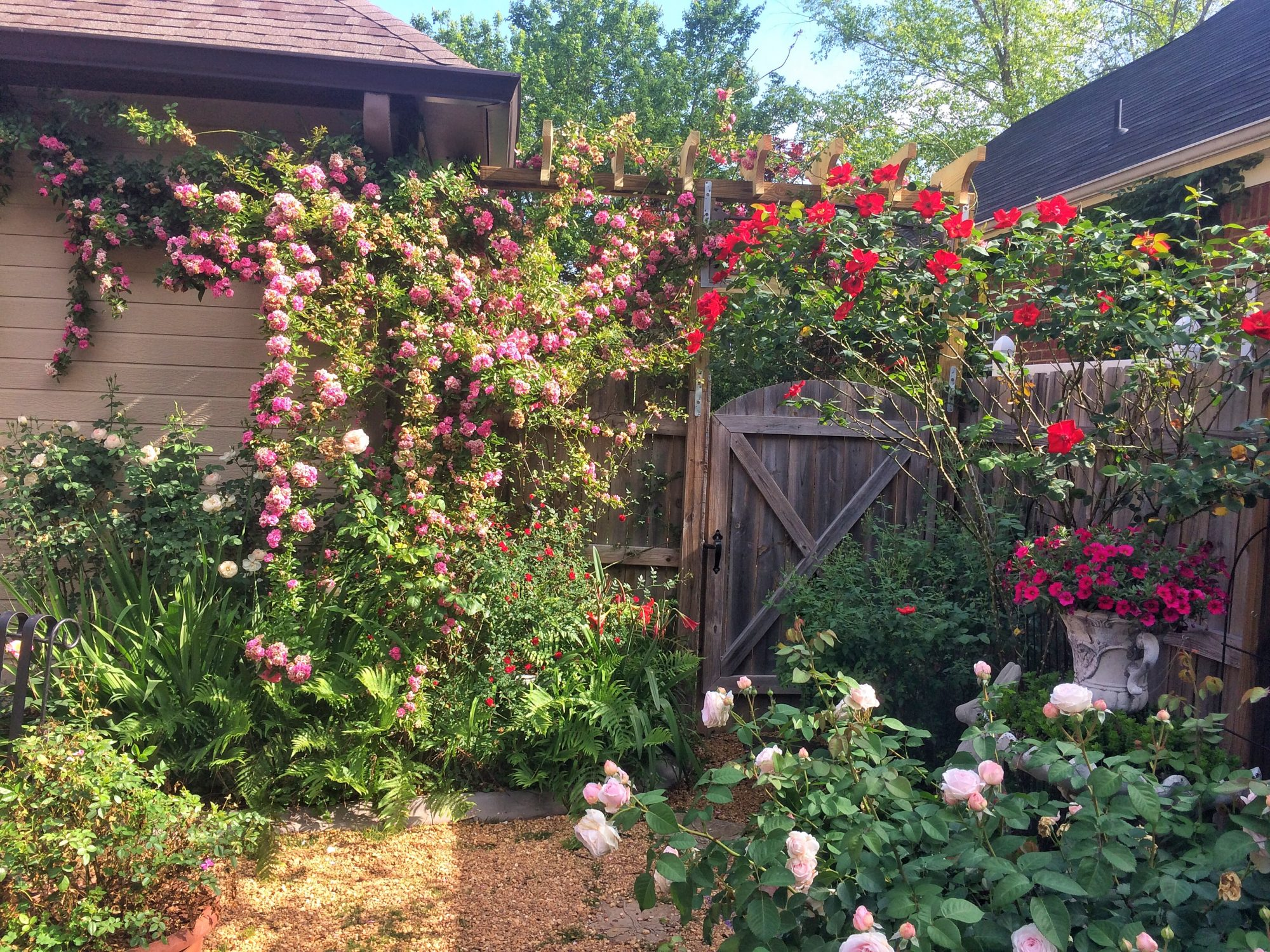 Groovy Grow Roses Like A Redneck Southern Living Download Free Architecture Designs Intelgarnamadebymaigaardcom