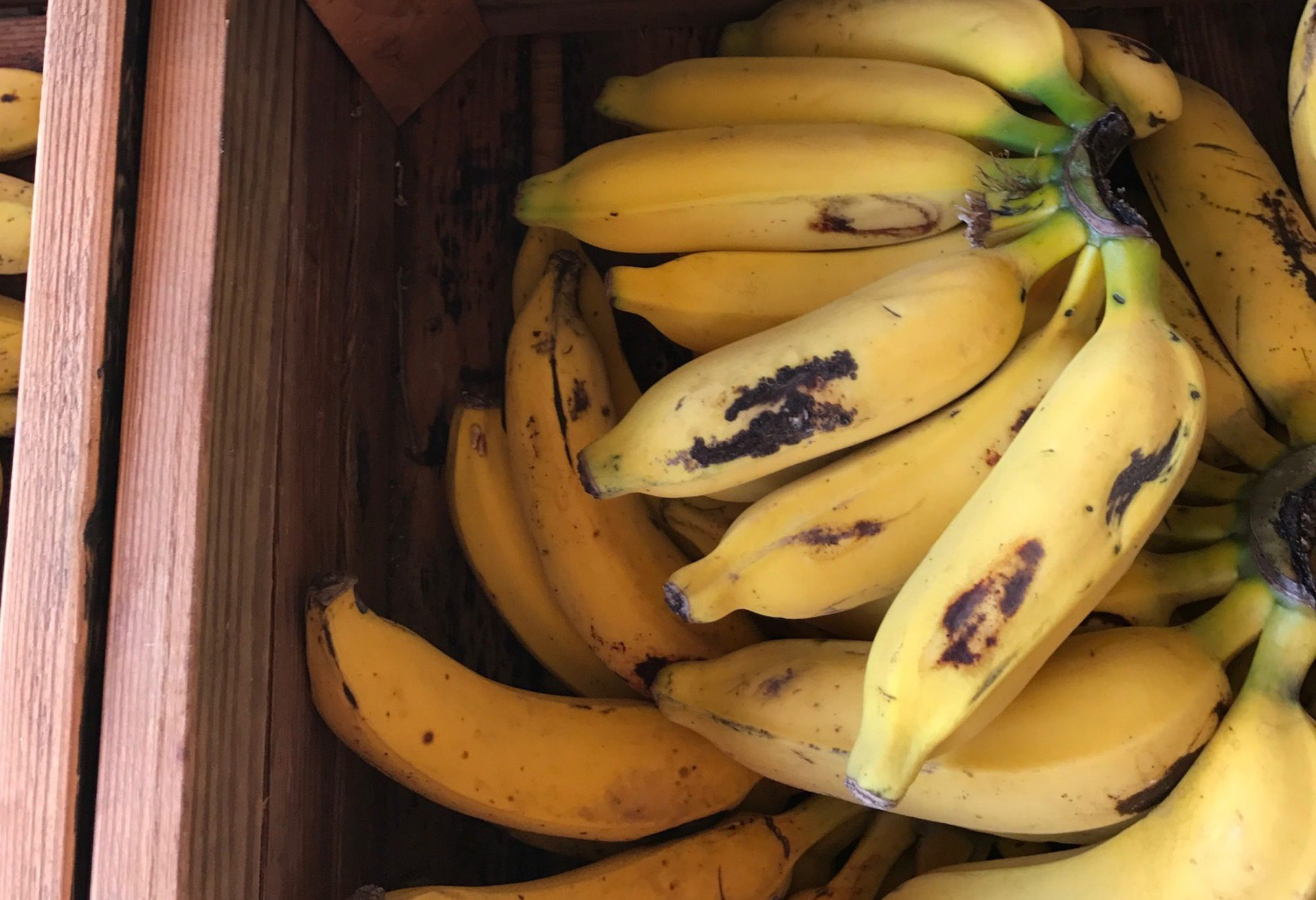 Apple Bananas Will Change the Way You Think About Bananas