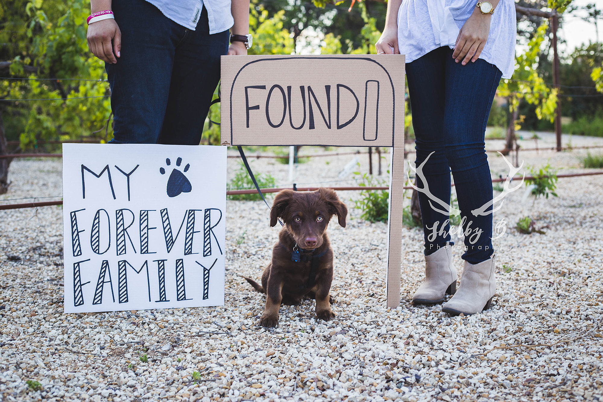 Puppy Rescued from Abandoned Fridge Gets Fitting Photoshoot With His Forever Family