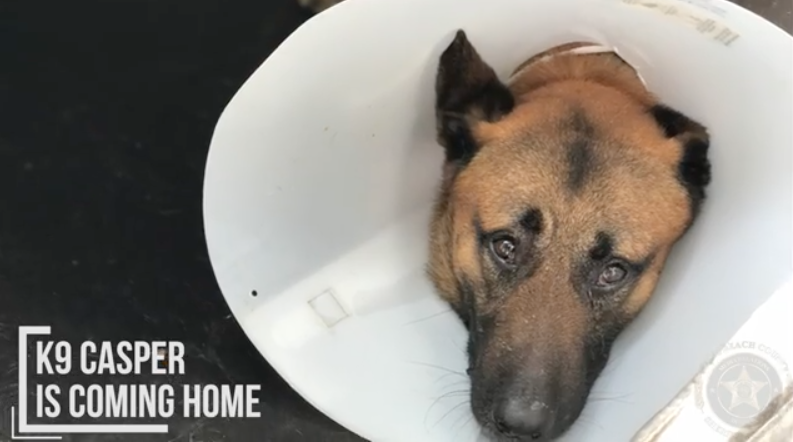Florida K9 Police Dog Recovers