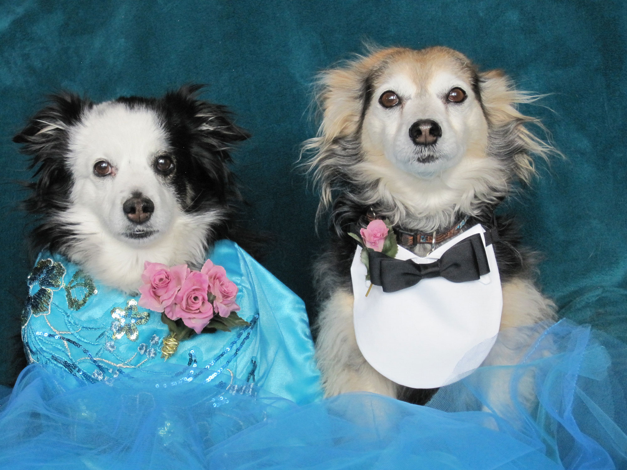 Senior Dog Prom Is a Real Thing and Your Pooch Can Participate!