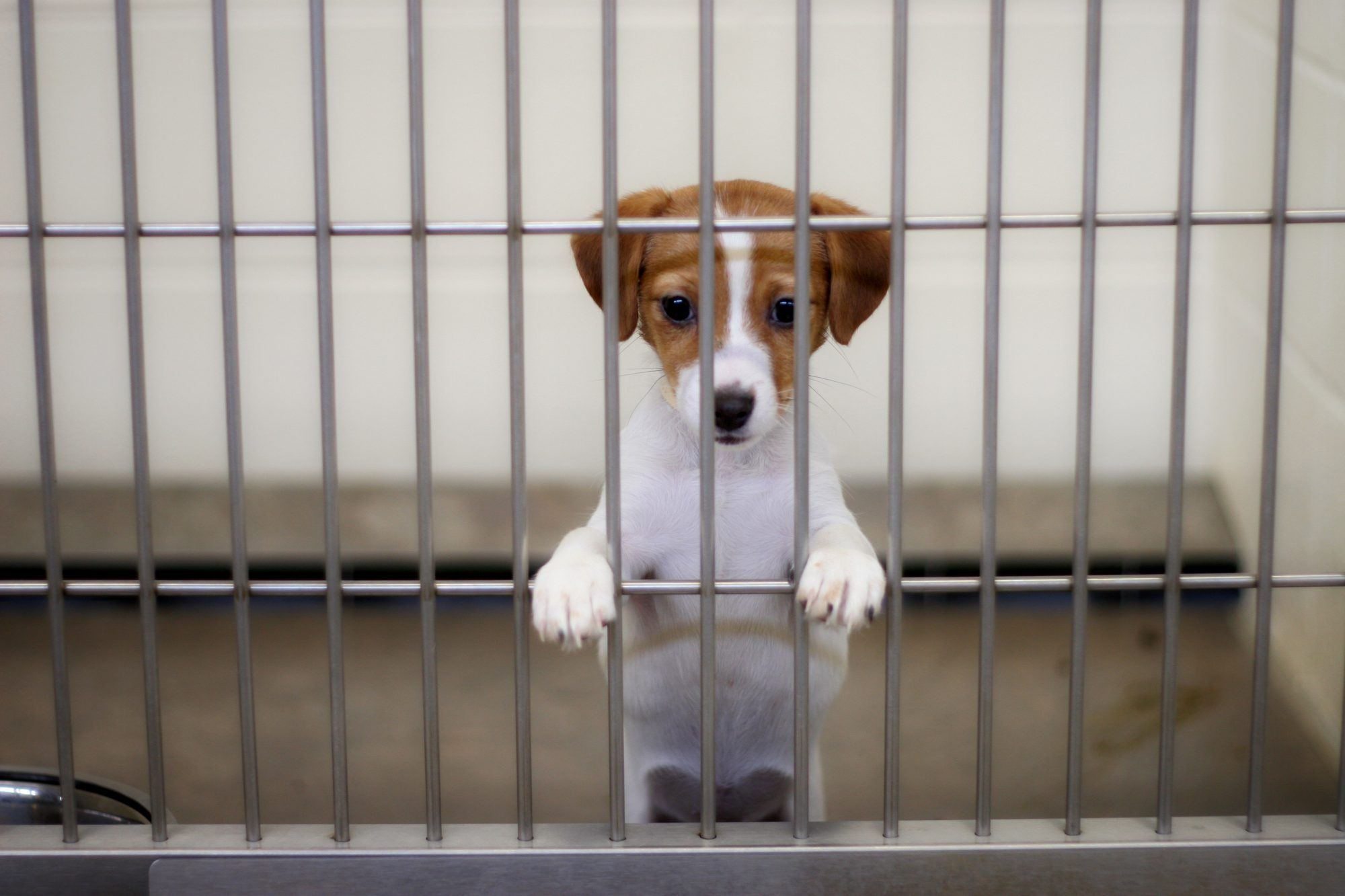 puppy behind bars