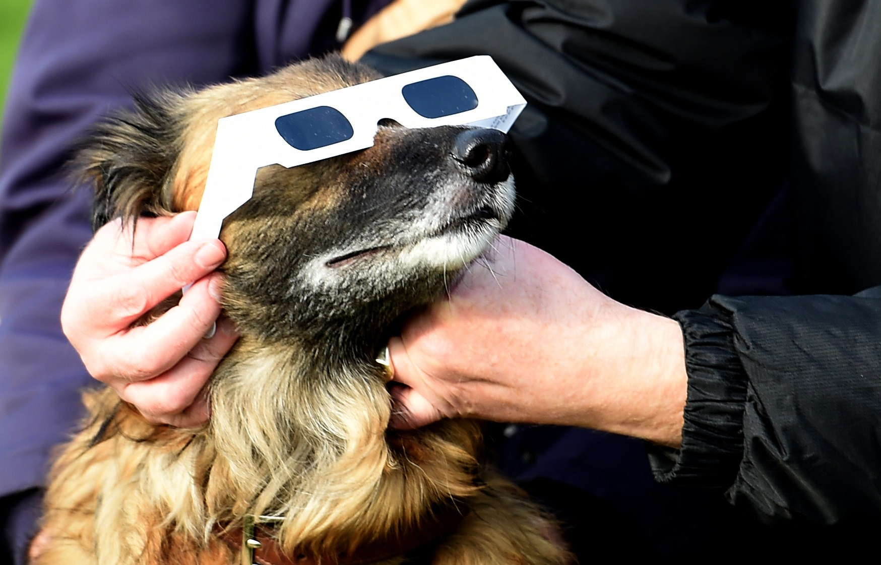 dog wearing solar eclipse glasses
