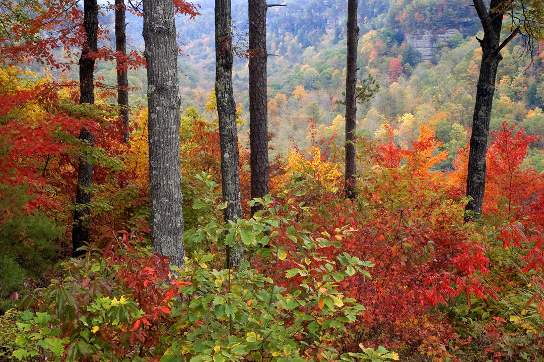 20 Charming Mountain Towns to Visit This Fall - Southern ... - photo#23