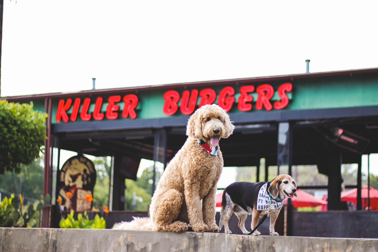 Grindhouse Burgers Dog-Friendly Patio