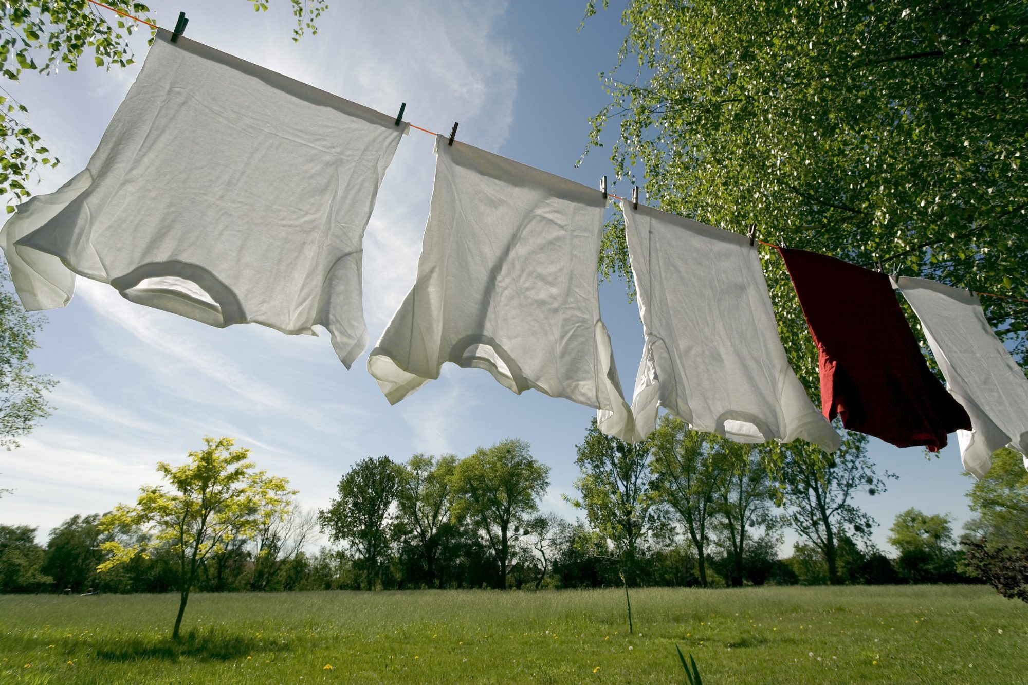 White T-Shirts on Laundry Line