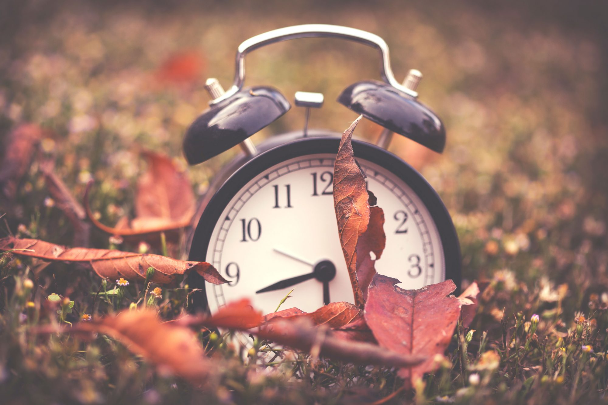 Clock Surrounded by Leaves
