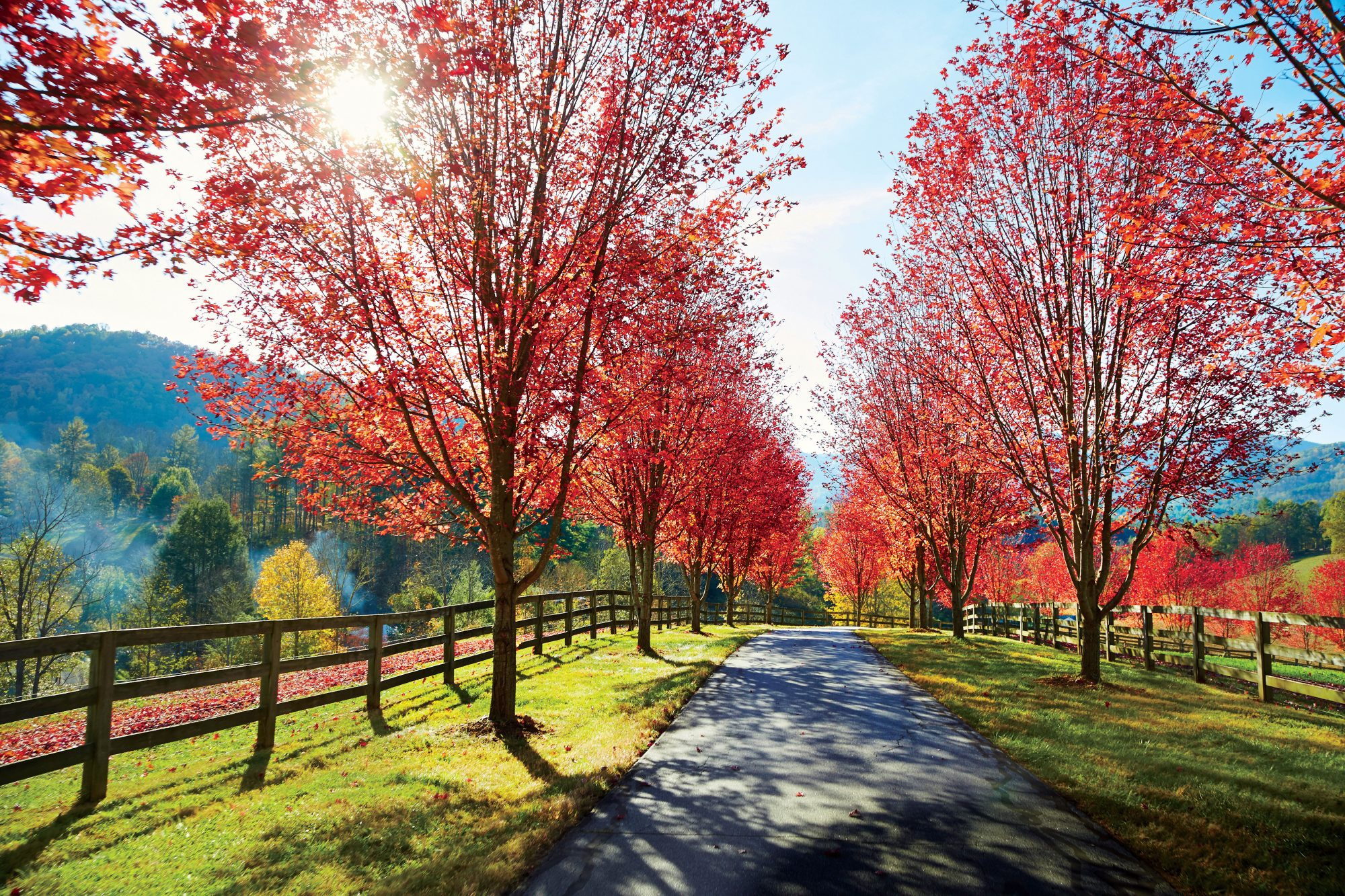 Red Trees at Barkley's Mill in North Carolina