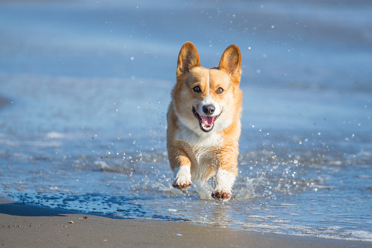 Happy Dog Splashing Through Water
