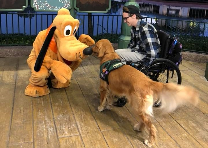 Pluto and Service Dog at Disney