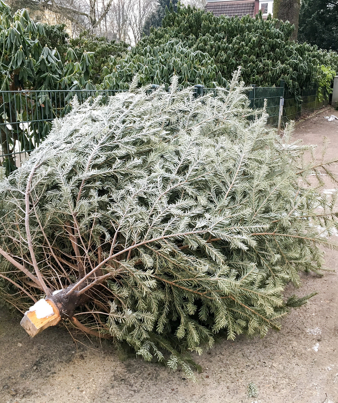 "Woman Returns ""Dead"" Christmas Tree to Costco in January—And Gets a Full Refund"
