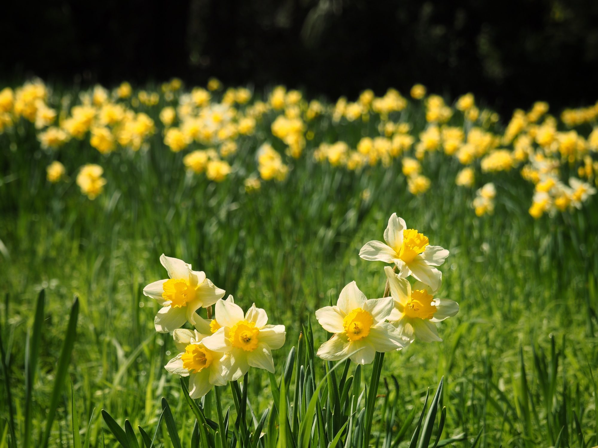 Is It Too Late To Plant Bulbs Southern Living