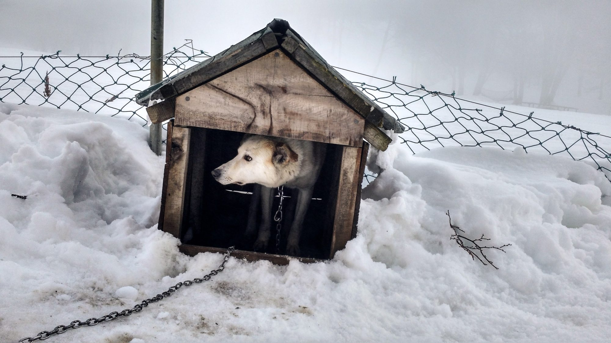 Dog Outside in Doghouse in Snow