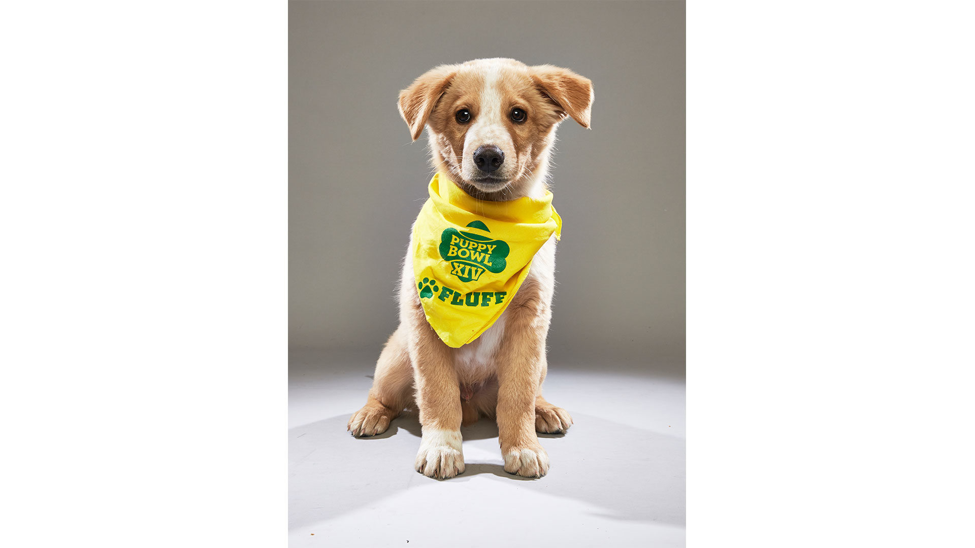 Fluff the Puppy Bowl Dog 2018