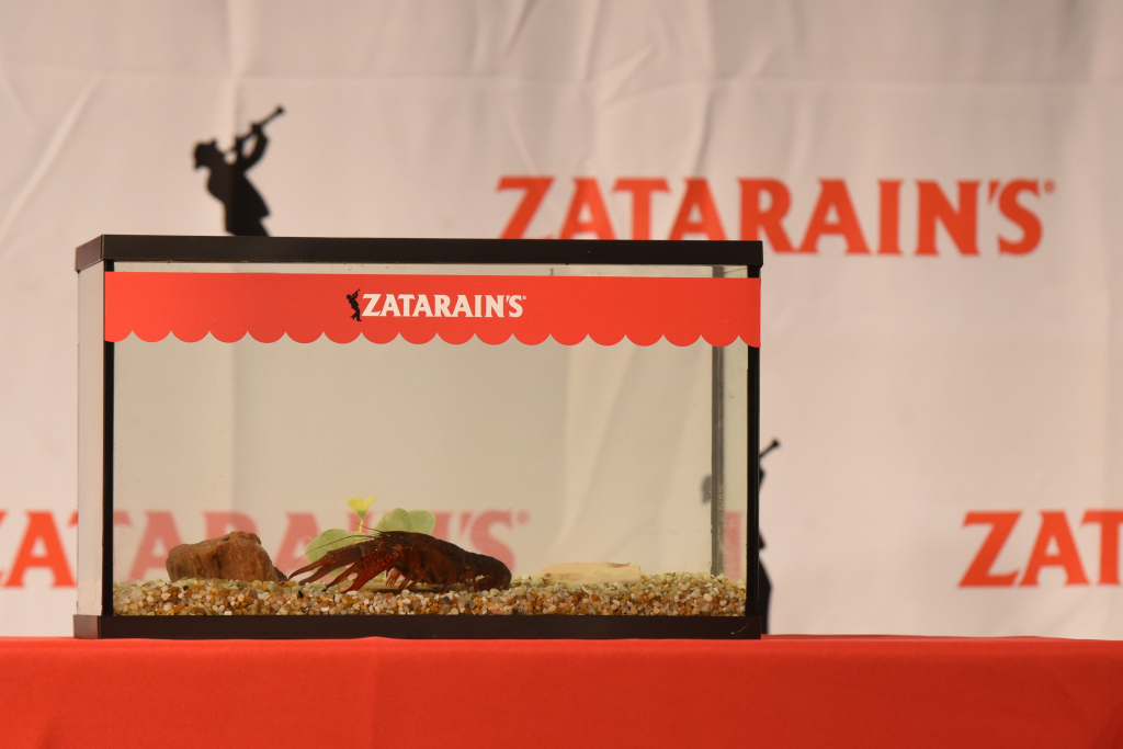 Crawfish in Tank