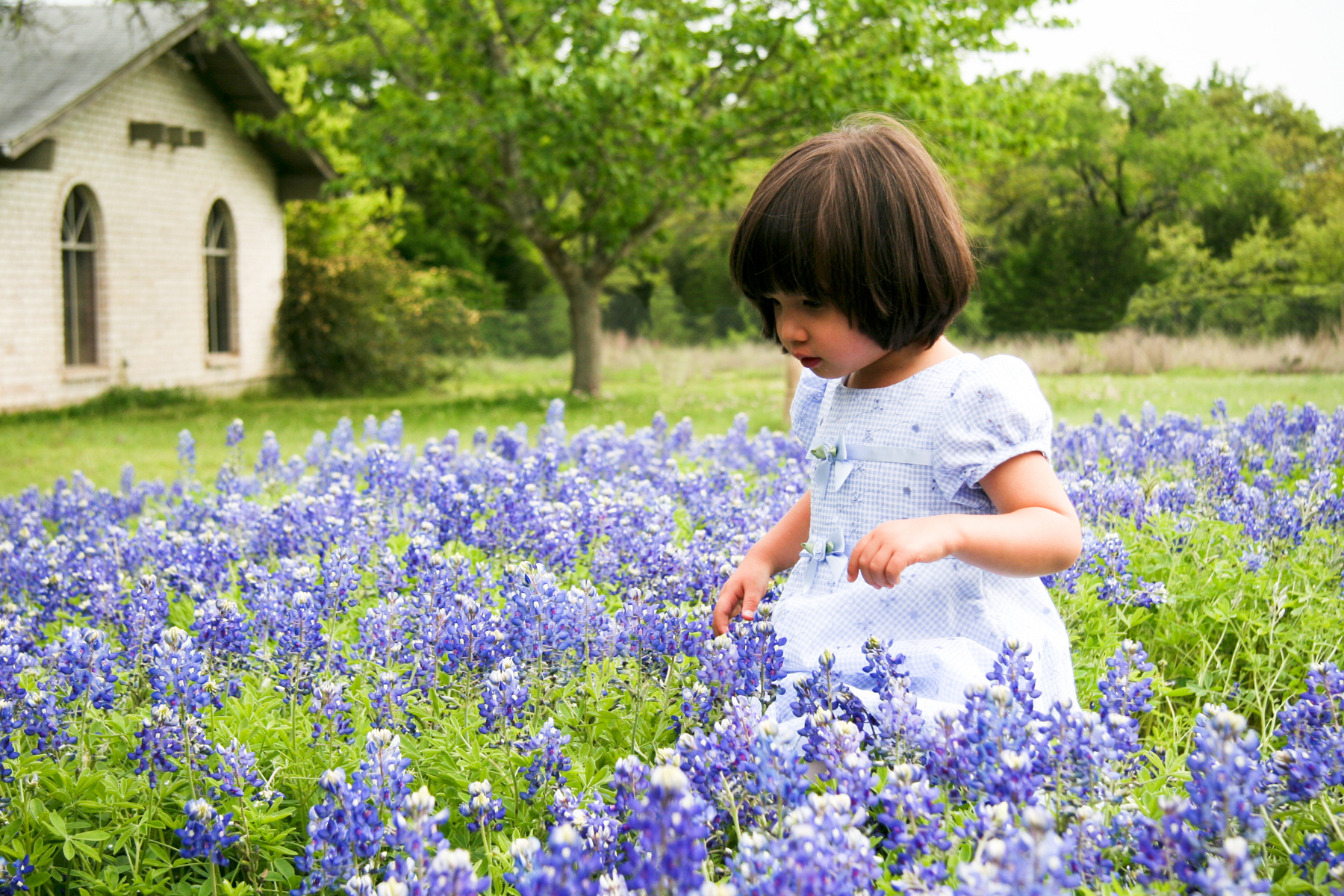 Little Girl in Blue Bonnets
