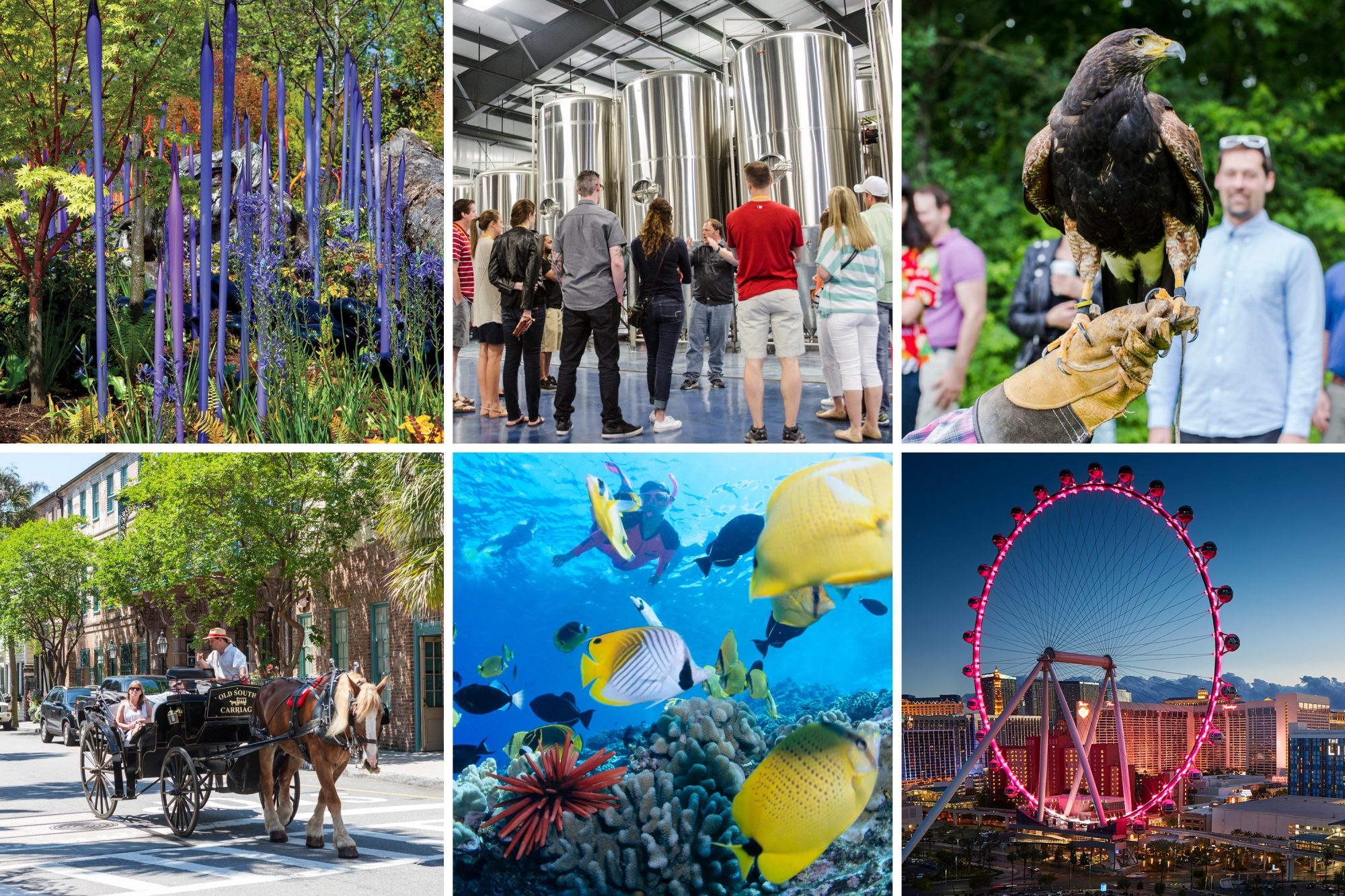 (clockwise from top left) Chihuly Garden and Glass, Seattle, Washington; City Brew Tour, Burlington, Vermont; Falconry beginner's lesson, The Greenbreier, White Sulphur Springs, West Virginia; The High Roller at The LINQ, Las Vegas, Nevada;...