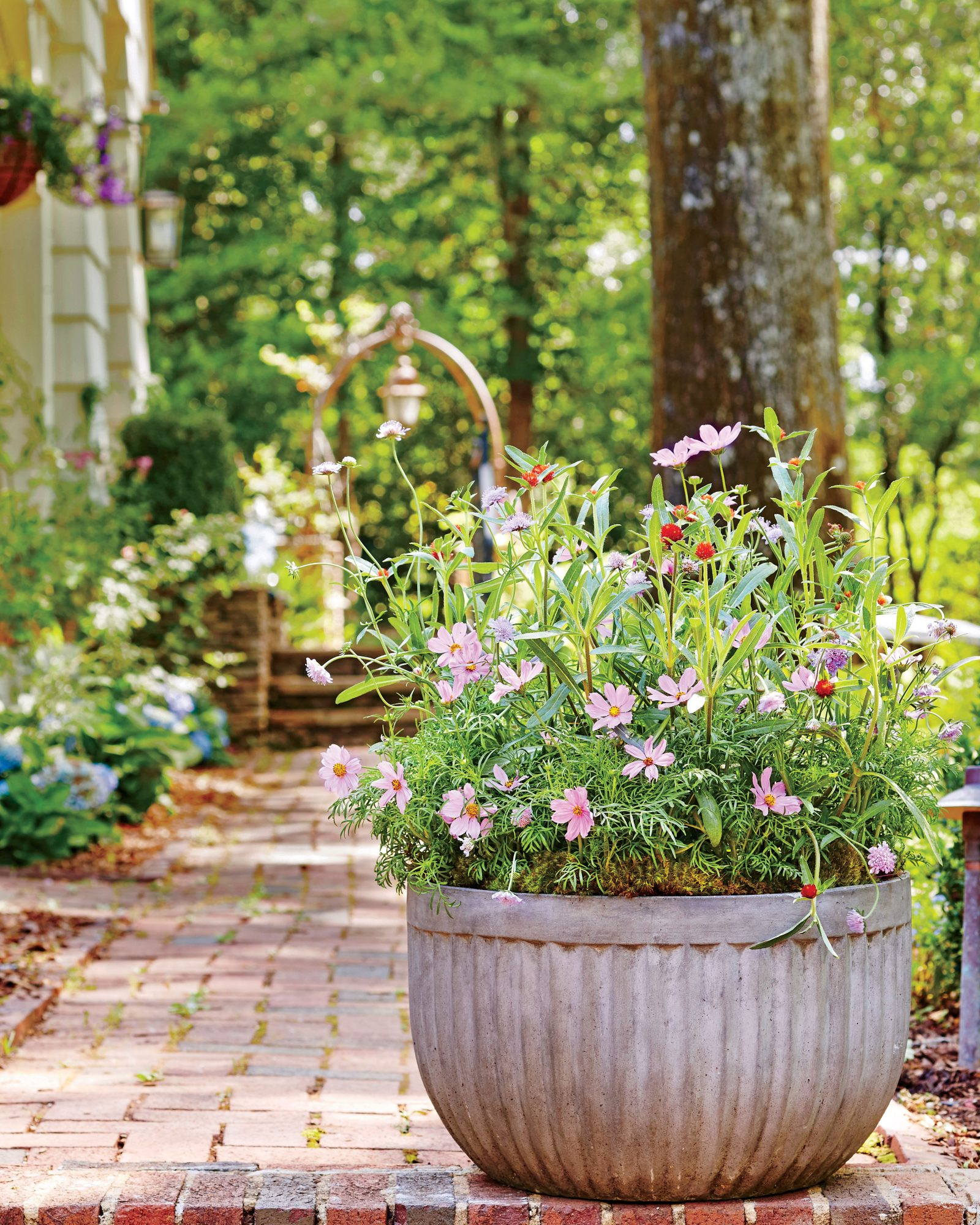 Container Gardening: Yes, You Can Grow Cosmos In A Container