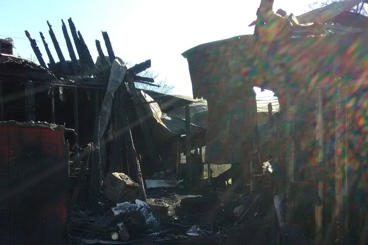 Great Dane Alerts and Saves Family From Giant Fire Minutes Before House Goes Up in Flames great-dane-2