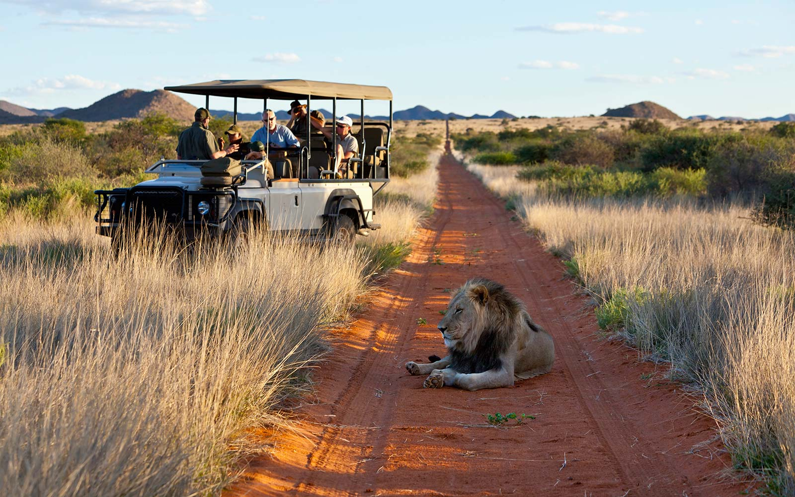 Lion Wildlife Kalahari South Africa Safari Costco Travel Excursion Expedition