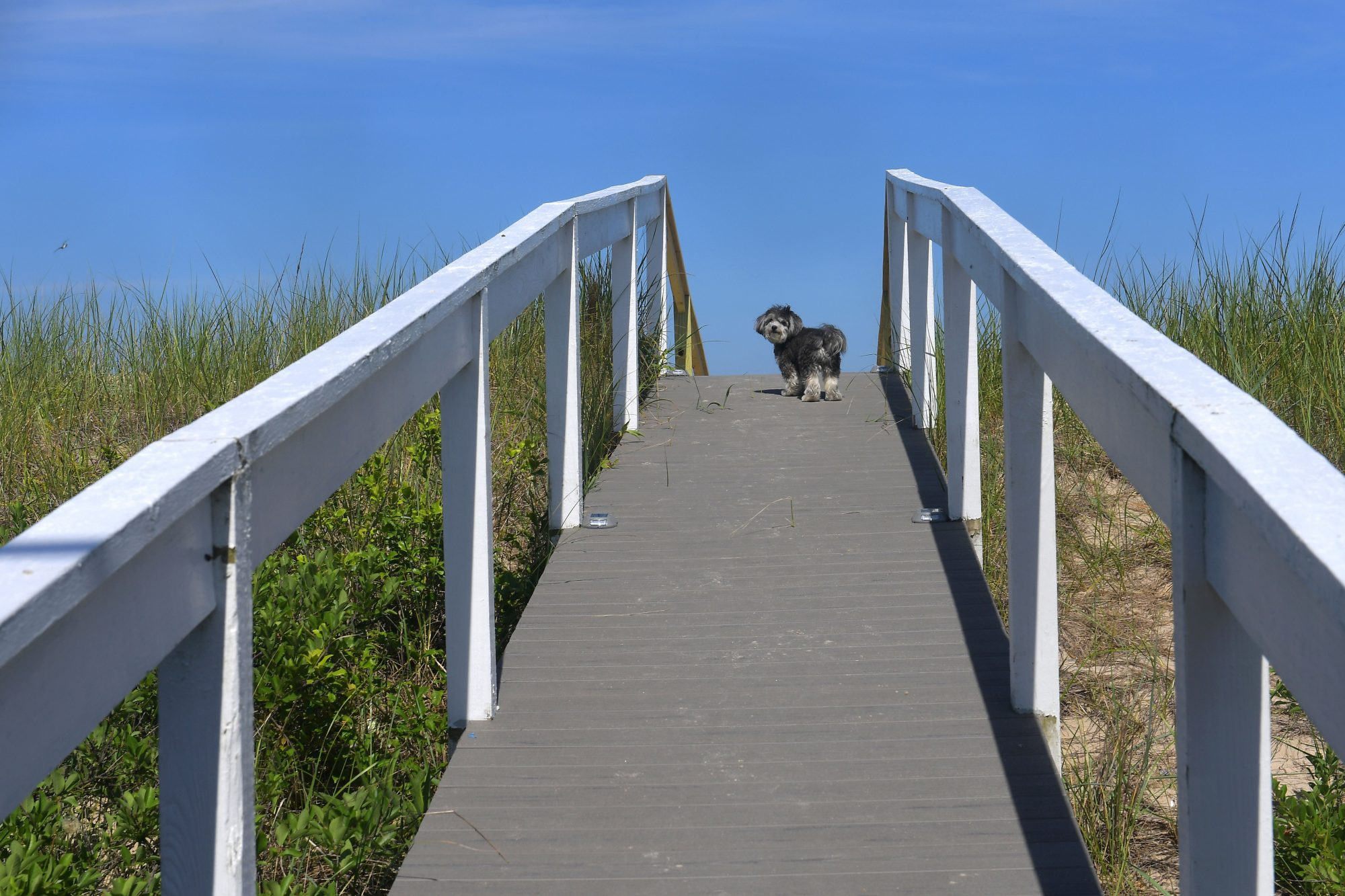 "Escape to ""The Quiet Resorts"": Bethany Beach and Fenwick Island"