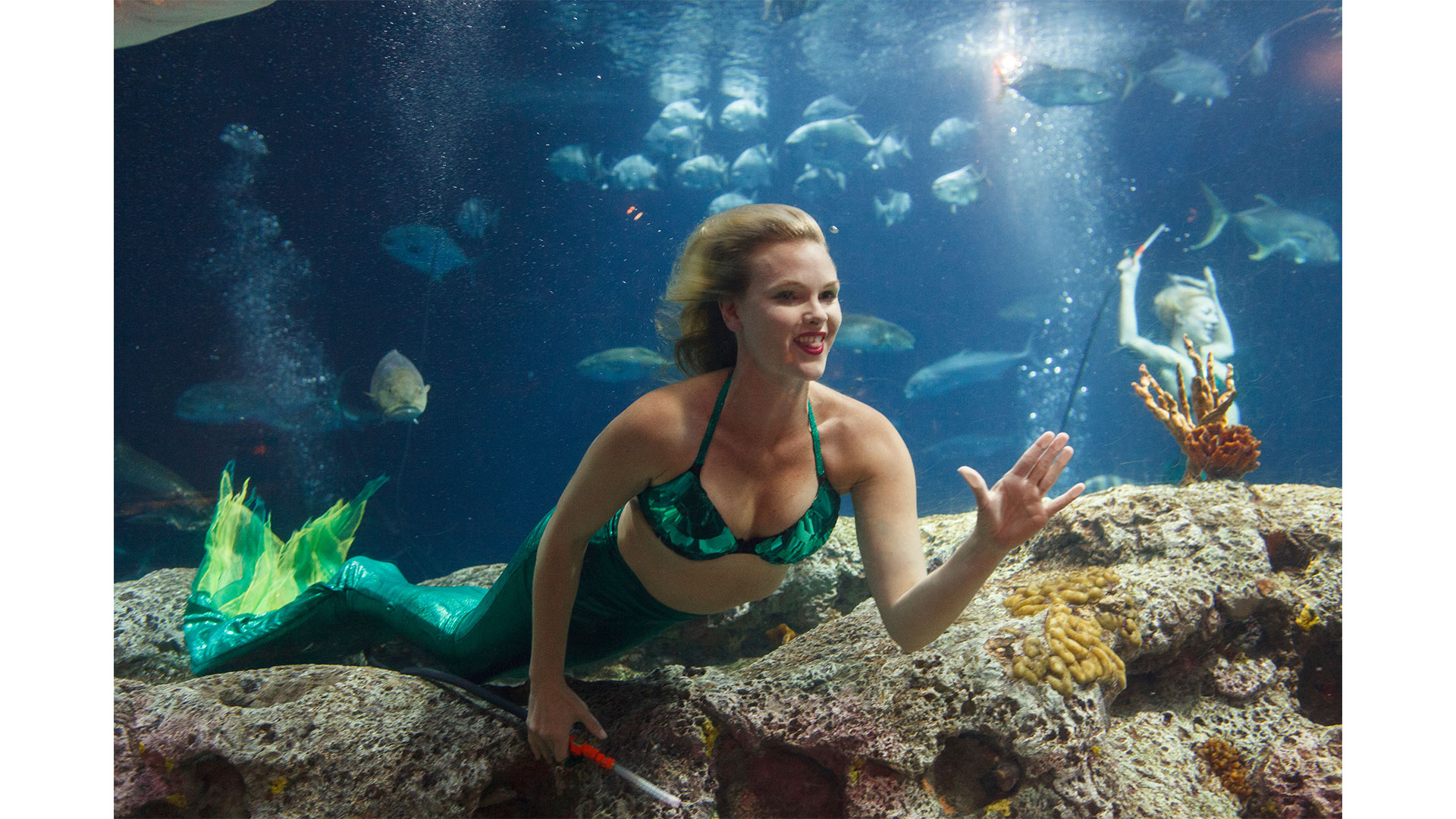 Southern Living Weeki Wachee Mermaids South Carolina Aquarium