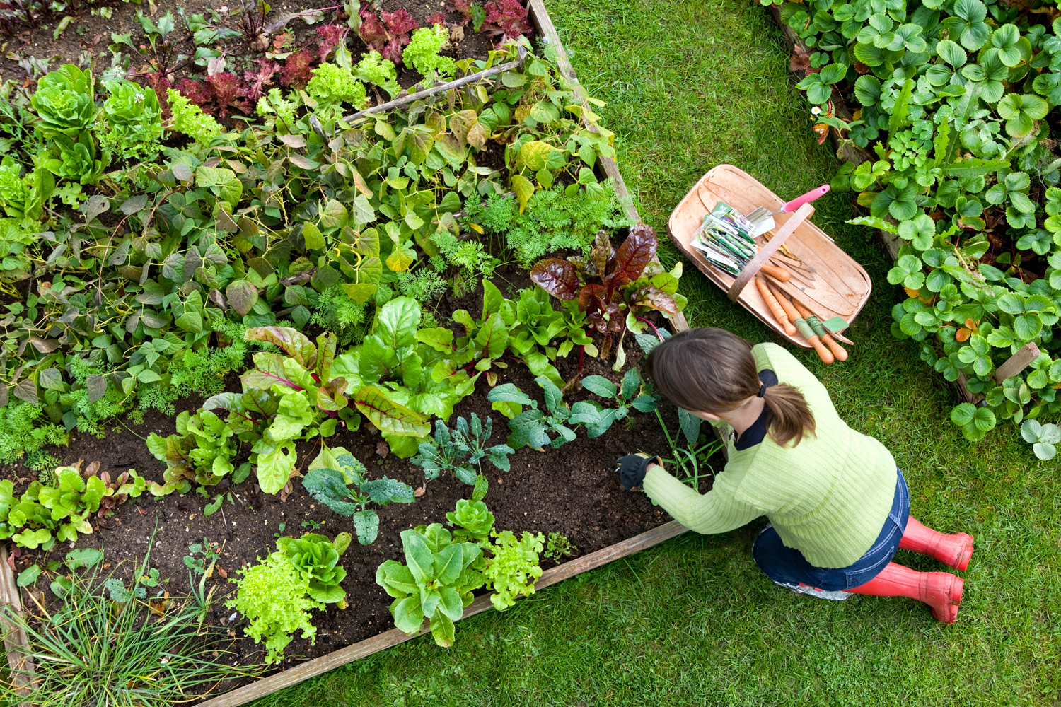 How Gardening Could Help You Lose Weight