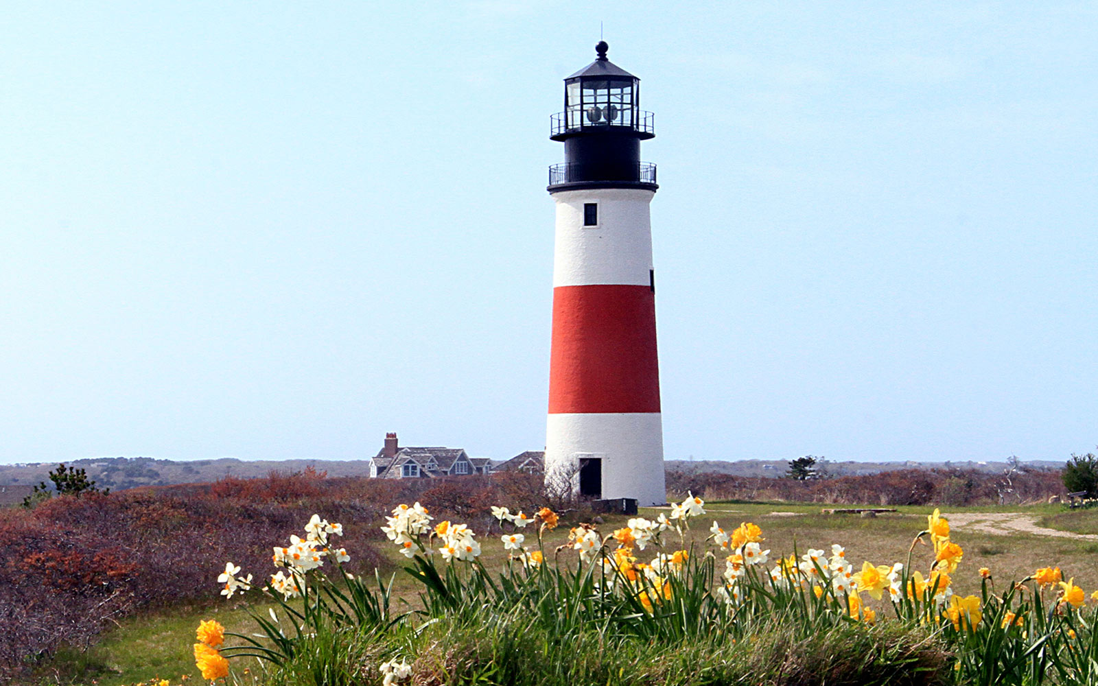 Daffodil Festival in Nantucket, Massachusetts
