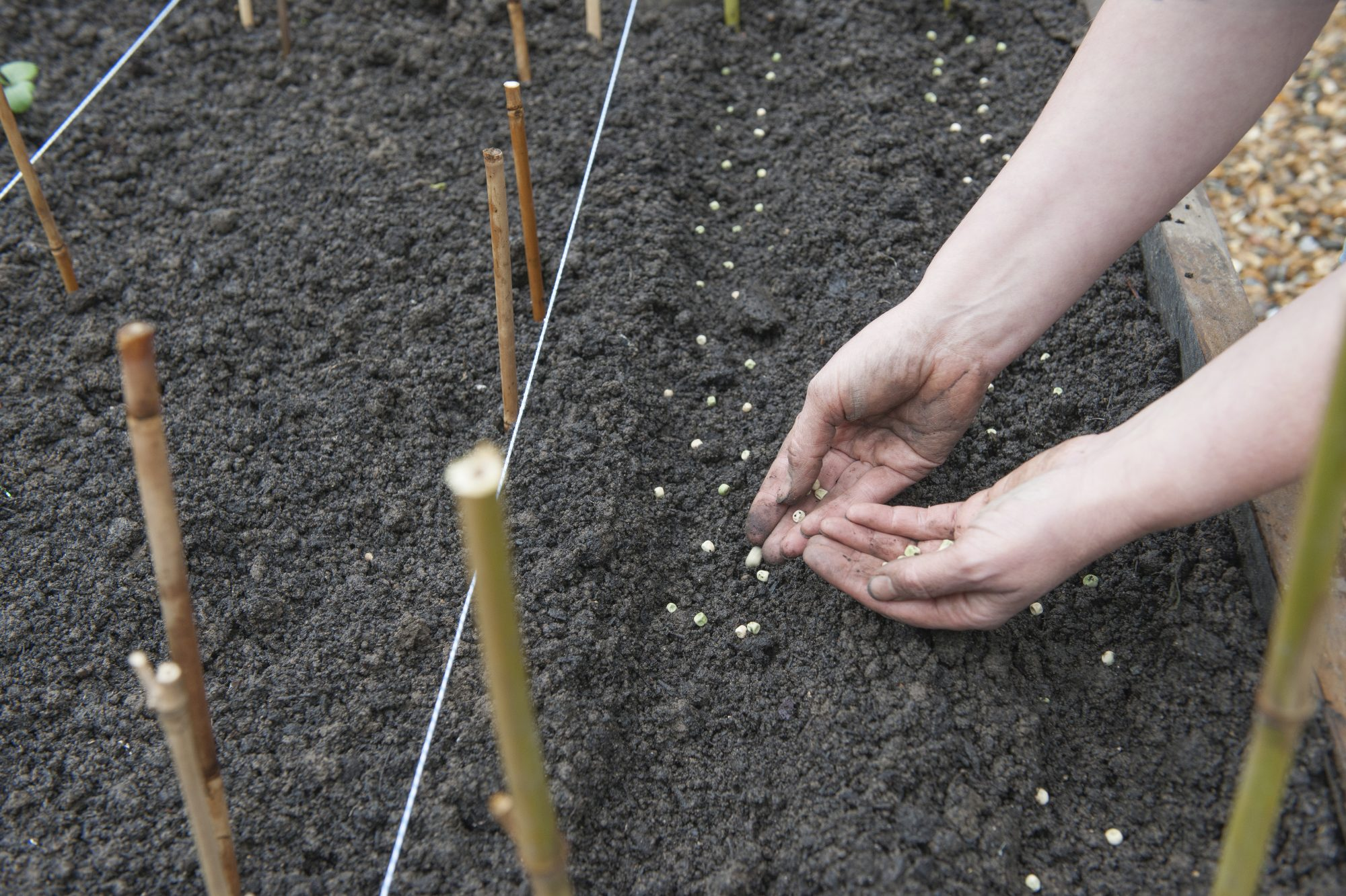 Planting Vegetable Garden Seeds