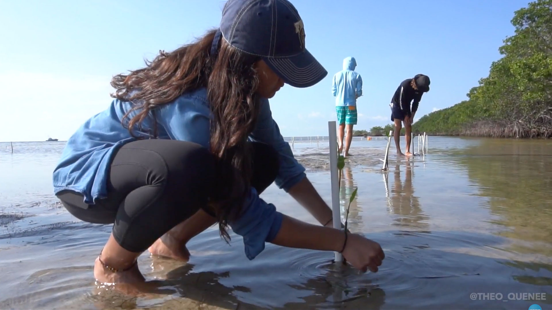 Southern Living Florida Teens Plant Mangrove Trees