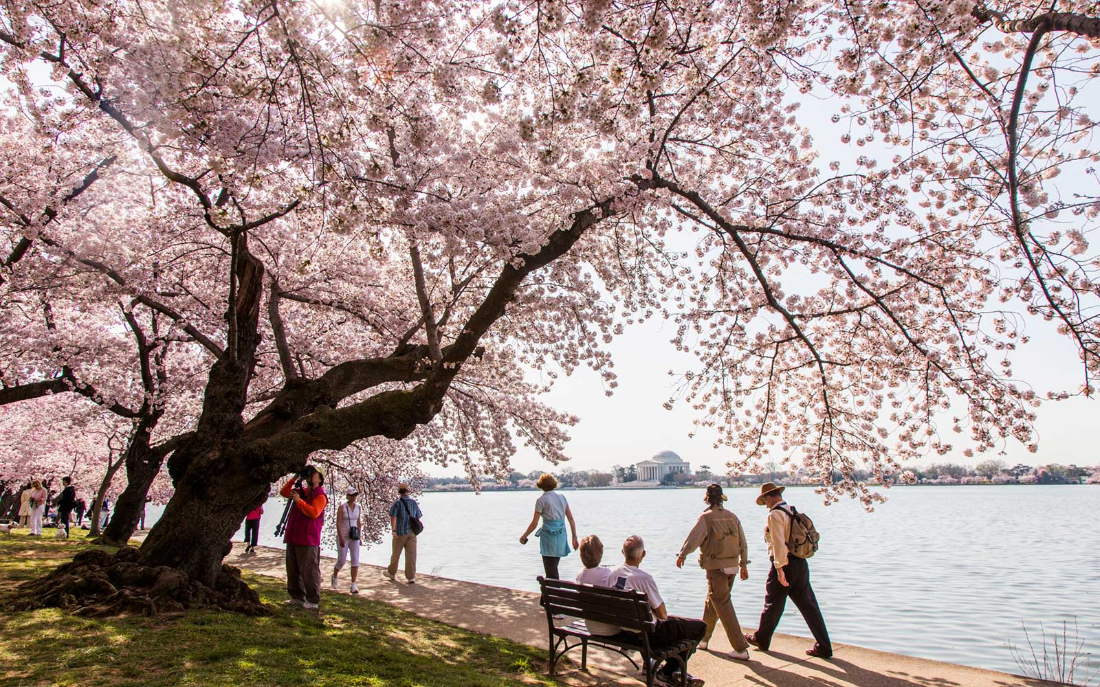 Cherry Blossom Festival in Washington, D.C.
