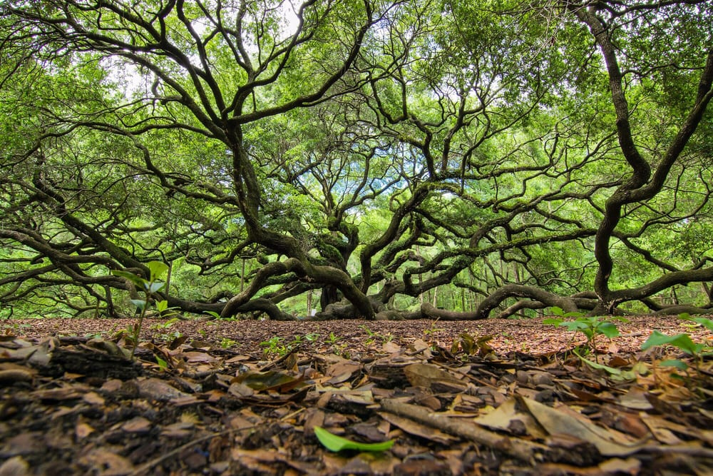 21. Angel Oak