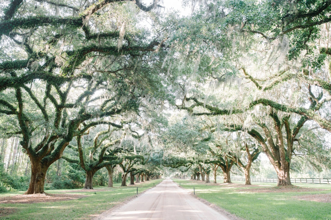 The 12 Best Charleston Wedding Venues Southern Living
