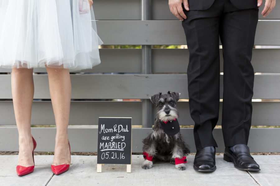 Here's what you need to know if you want your pet to be the ring bearer at your wedding dog-married-e1526413288927