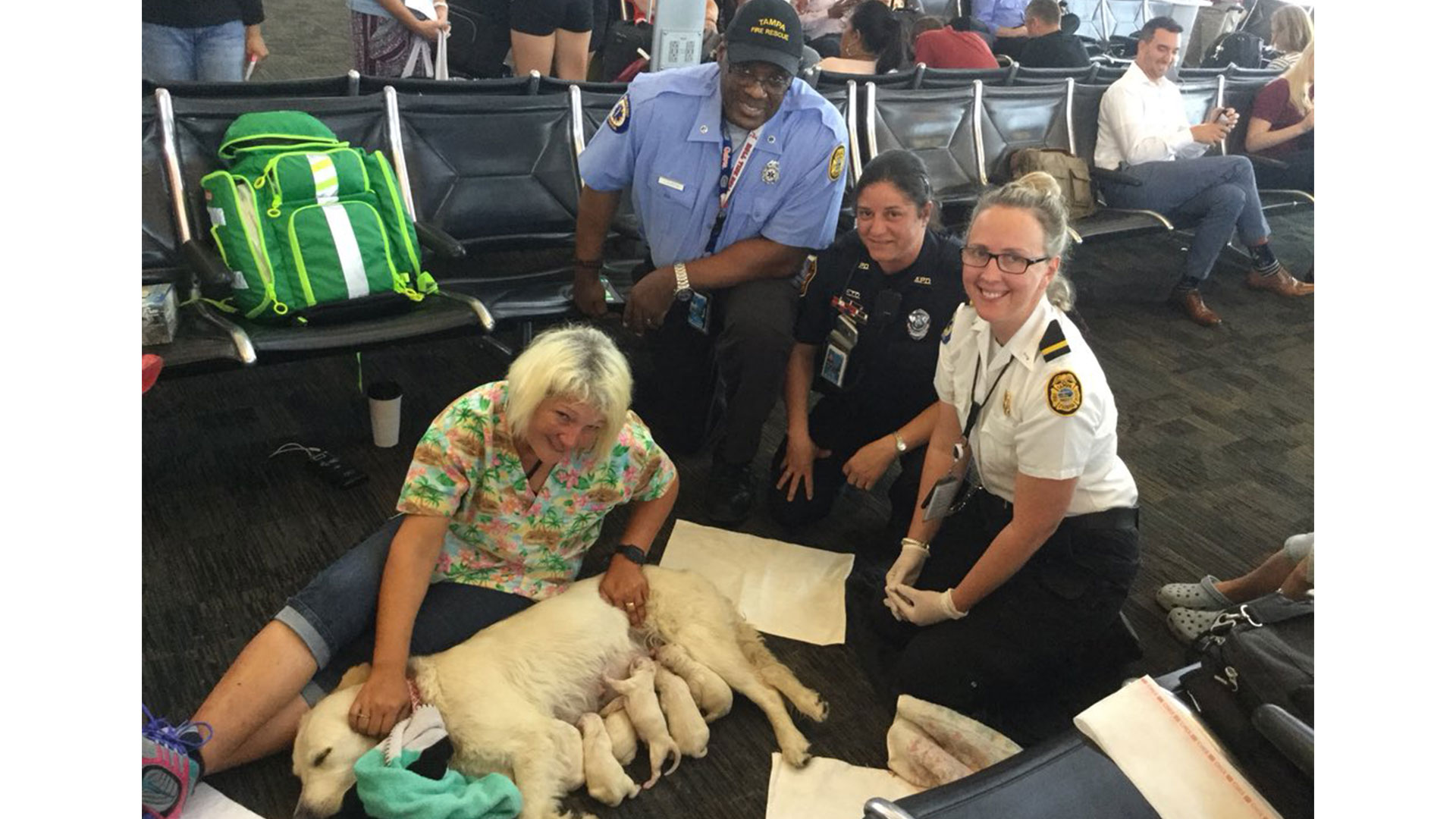 Tampa Airport Service Dog Puppies