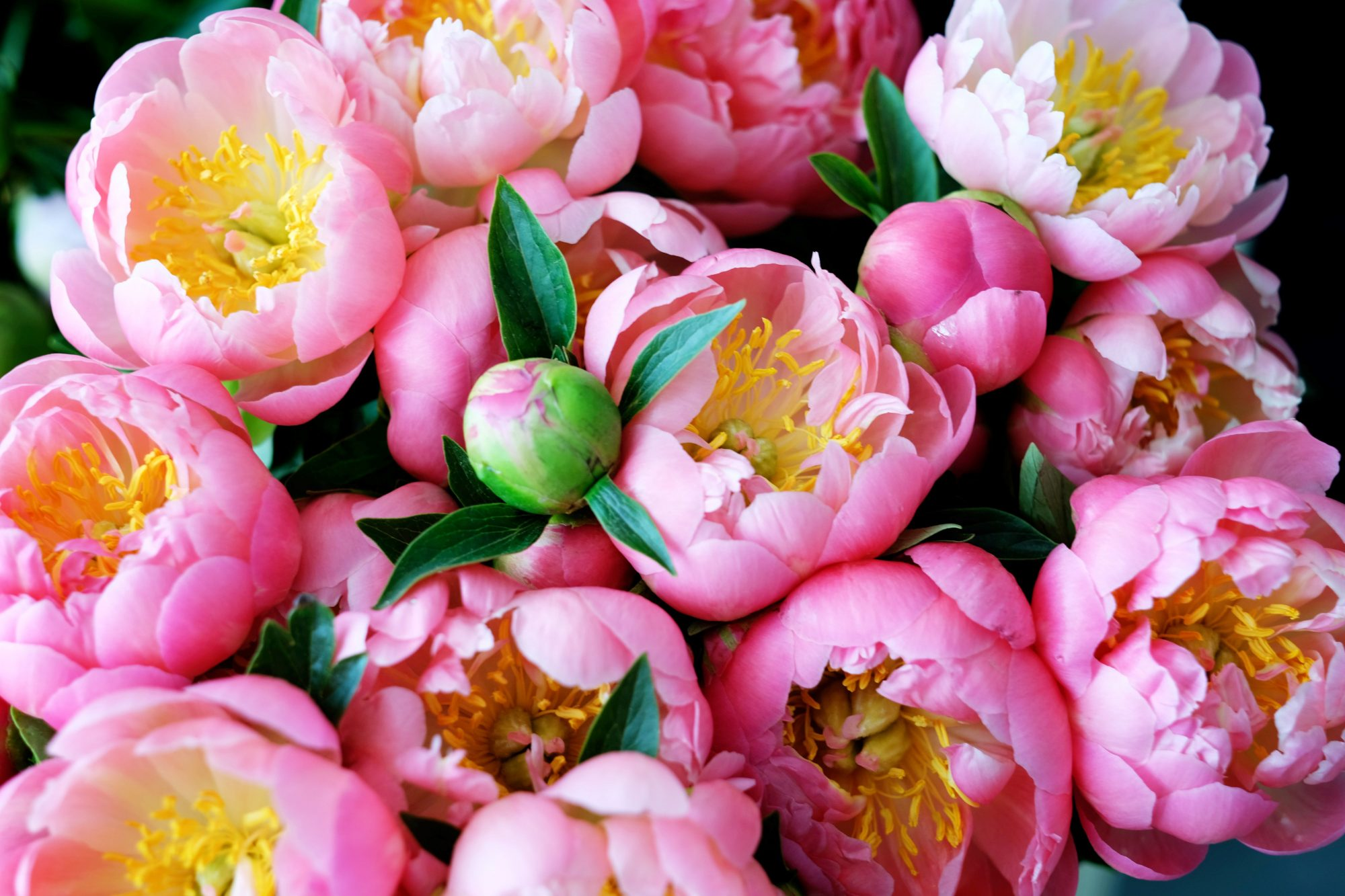 Facts About Flowers Peony Edition Southern Living