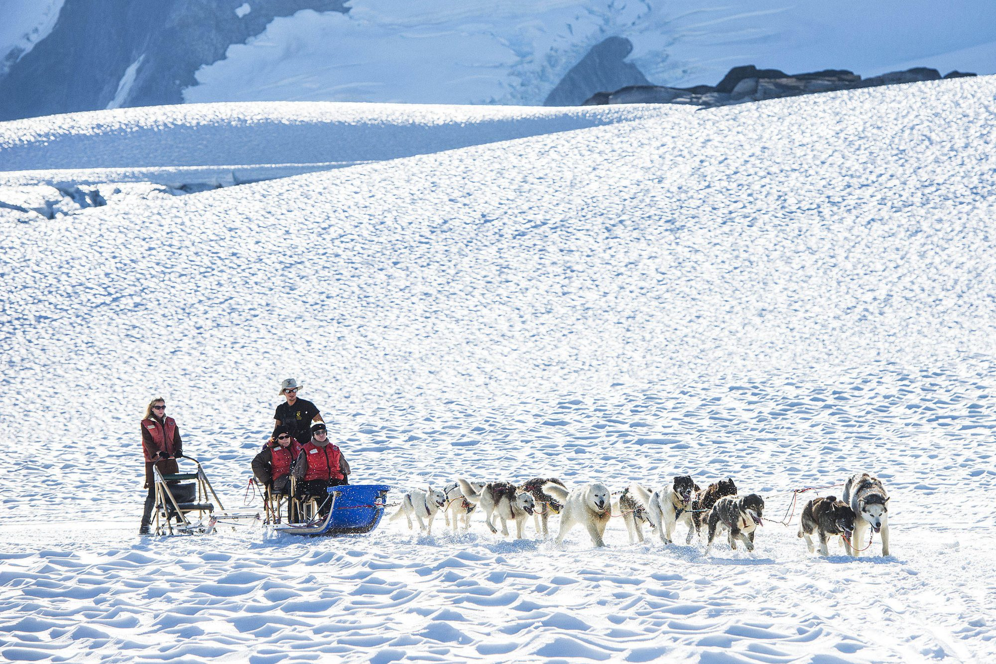 Enjoy a Fun Sled Dog Experience