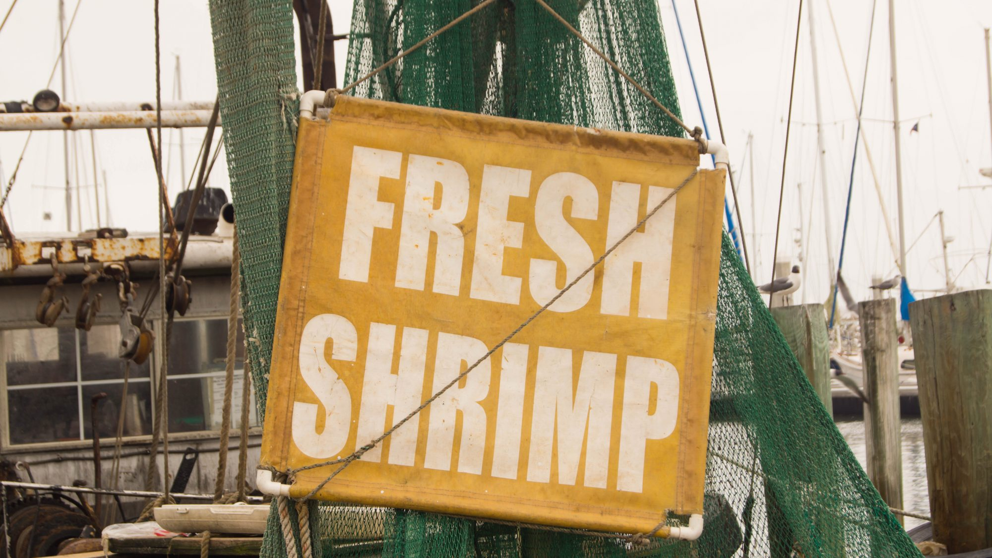 South Carolina Shrimp Season