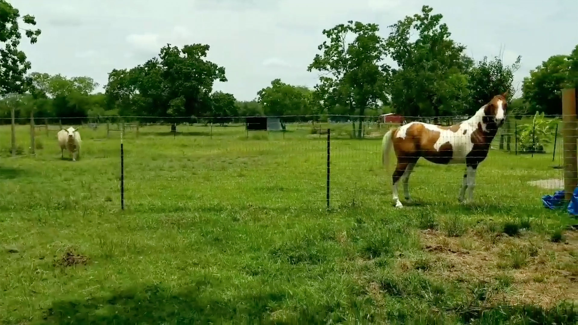 Horse Meets New Mare