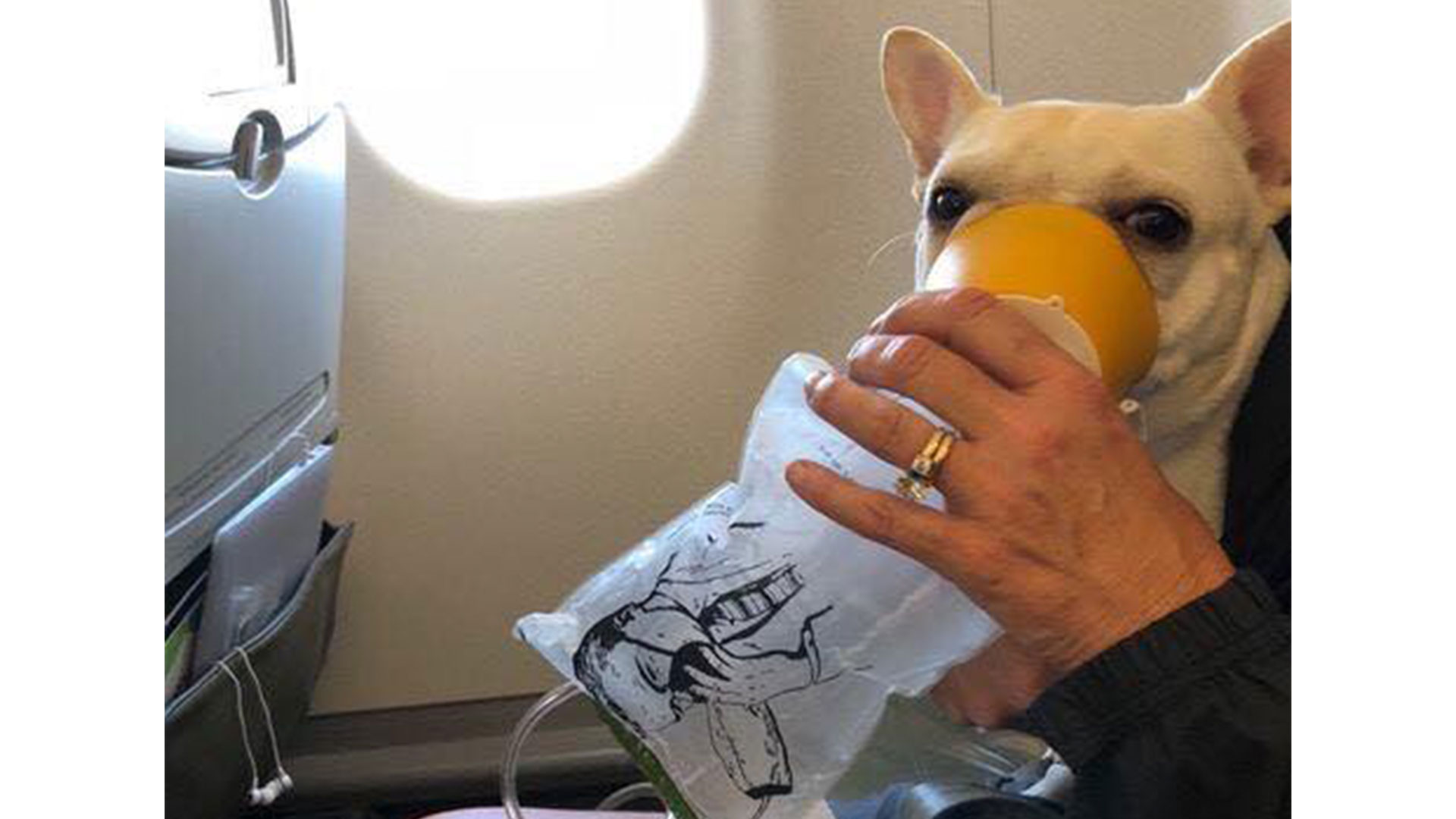 French Bulldog Oxygen Mask