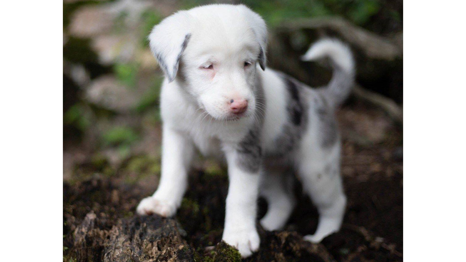 Toffee Deaf Puppy Rescue